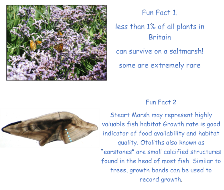 fun facts 1-2d